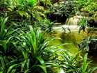 Fliis-fototapeet Jungle waterfall lagoon 360x270 cm ED-109409