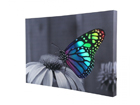 LED pilt Changing Butterfly 60x40 cm ED-116001