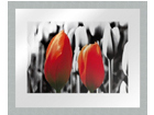 Pilt Modern - Two red tulips1 20x25 cm OG-37970