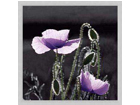 Pilt Flowers - Purple Poppies3 33x33 cm OG-37983