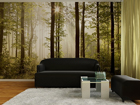 Fototapeet Early wood 360x254 cm ED-88028