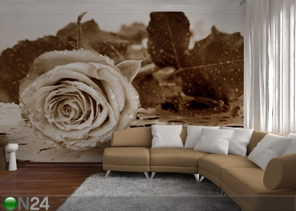 Fototapeet Black and white rose 360x254 cm ED-88057